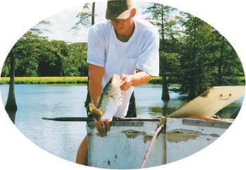 fish-clean